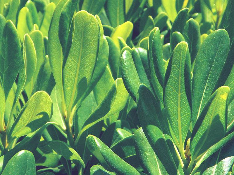 piante balcone